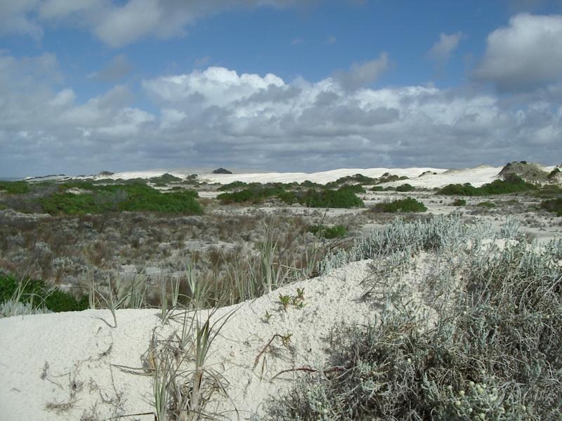 Home Sweet Home – not the Nullarbor (Nuytsland, Western Australia)